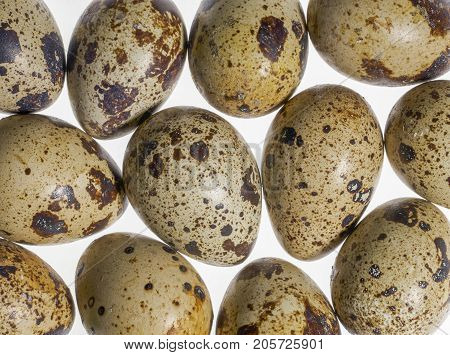 some brown dappled quail eggs in white back
