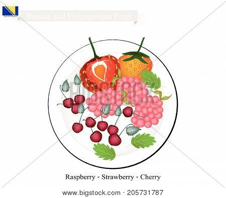 Bosnian Fruit, Illustration of Raspberry, Strawberry and Cherry. The Famous Fruits of Bosnia and Herzegovina.