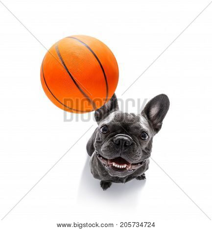 Basketball Player Dog