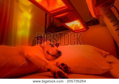 Red Light Therapy Dog