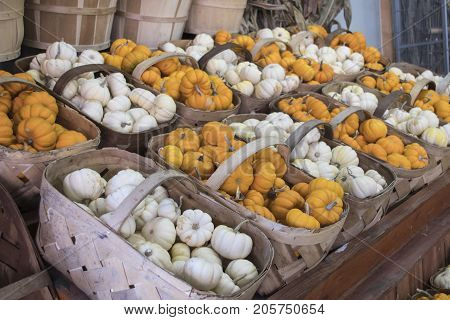 Mini pumpkins gourds on display in baskets at a farmer's market.
