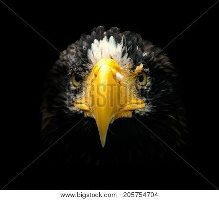 Poster portrait eagle with black backround. Eagle