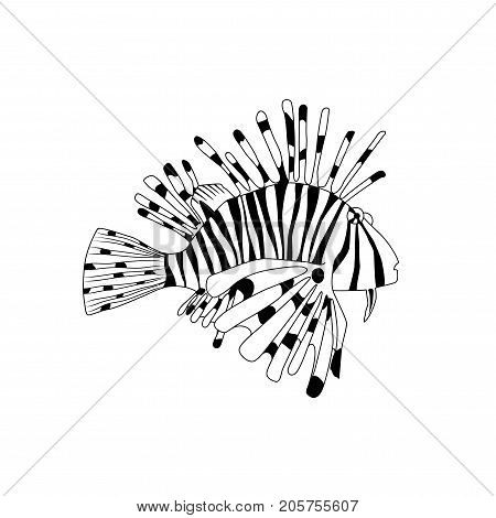 Vector black and white lionfish. Cartoon Pterois volitans