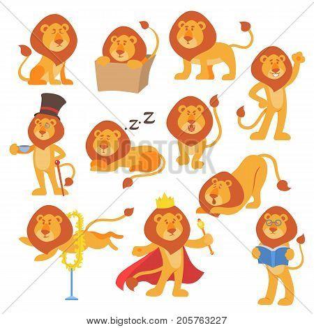 Lion mascot vector pose happy cartoon cute wild character safari mammal cat jungle animal illustration. Africa mascot male big design zoo brave predator.