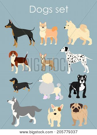 Vector illustration of different type of cartoon dogs. Dogs set in cartoon flat style on light blue background