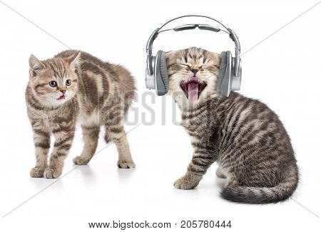 funny cat in headphones listening music and another cat is shocked by this