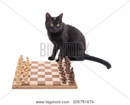 Black cat sitting behind a chessboard, on white