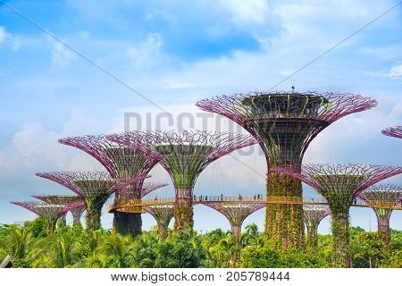 SINGAPORE - JULY 10 : View of amazing Supertree is main Marina Bay Sands district tourist attraction which is one of Singapore.