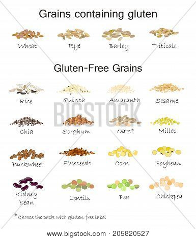 A variety of gluten free and containing gluten grains. Wheat, barley, oats, rye, buckwheat, amaranth, rice, millet, sorghum, quinoa, chia seeds, oatmeal, legumes. Vector isolated