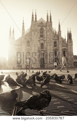 Pigeon sunrise at Cathedral Square or Piazza del Duomo in Italian, the center of Milan city in Italy.