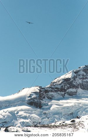 Bird flying over the snowed mountain into the blue sky