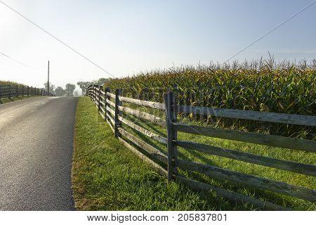 Split Rail Fence along Corn Field in Bright Morning Light