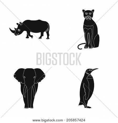 Black rhinoceros, panther wild cat, African animal elephant, imperial penguin. Wild animals set collection icons in black style vector symbol stock illustration .