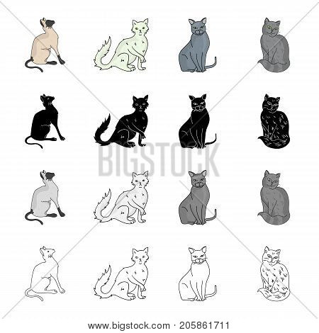 Cat breed Briton, Siamese, Nibelung, Chartreus. Different breeds of cat set collection icons in cartoon black monochrome outline style vector symbol stock illustration .
