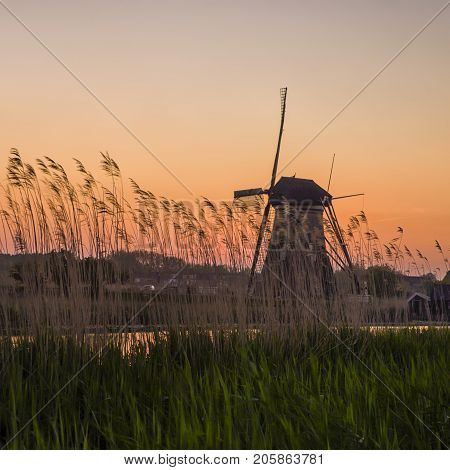 Black and White Contrast Image of Historic Dutch Windmill In Front of The Canal and Ears of Wheat Located in Traditional Village in Holland The Netherlands. Shot at Kinderdijk During Golden Hour. Horizontal Shot