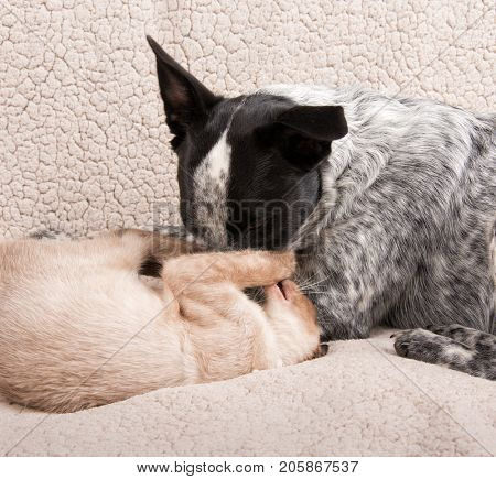 Young dog and cat gently play fighting