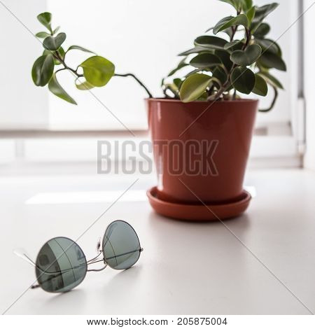 Minimalist stillife. Glasses and flower, shallow depth of field