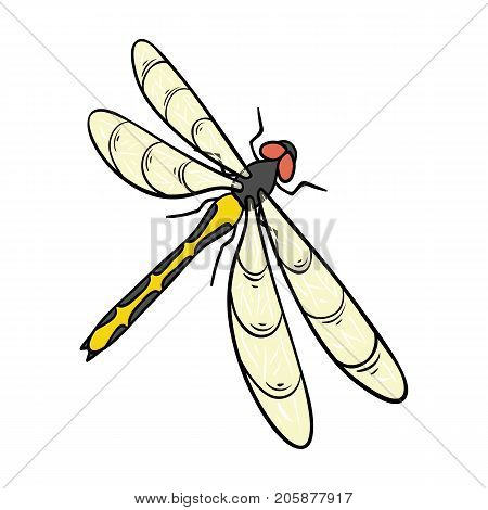 A dragonfly, a predatory insect.Dragonfly flying invertebrate insect single icon in cartoon style vector symbol stock isometric illustration .