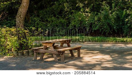 Wooden Picnic Table In Park