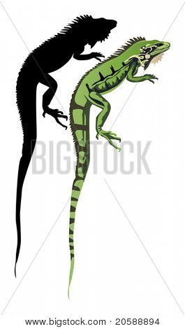 illustration with iguana and its shadow on white background
