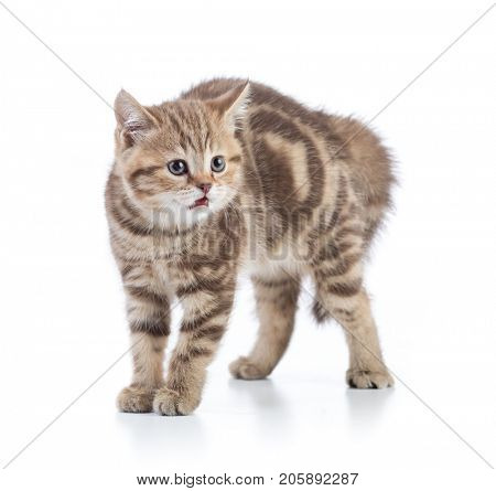 Afraid or scared funny kitten cat isolated. poster