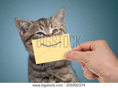 happy young cat portrait with funny smile on cardboard