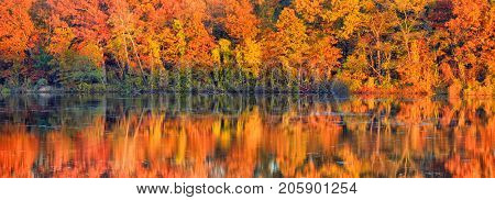 Panoramic view of autumn tree reflections