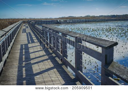 View of Point Pelee national park marsh area and boardwalk in the fall, Ontario, Canada