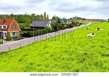 Sheep grazing on protective dam in Holland. High dike protecting the low lying land with grazing sheep.