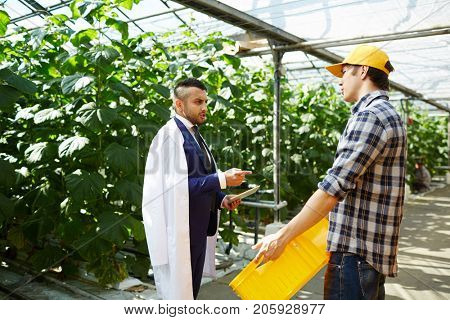 Dissatisfied bearded greenhouse owner wearing suit and white coat talking to young worker while carrying out inspection