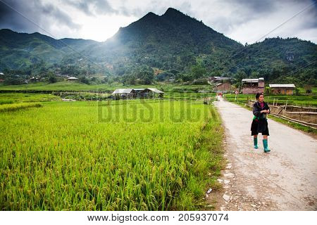 SA PA, VIETNAM - AUGUST 2017: green rice fields in Ta Phin village, Sa Pa, Vietnam