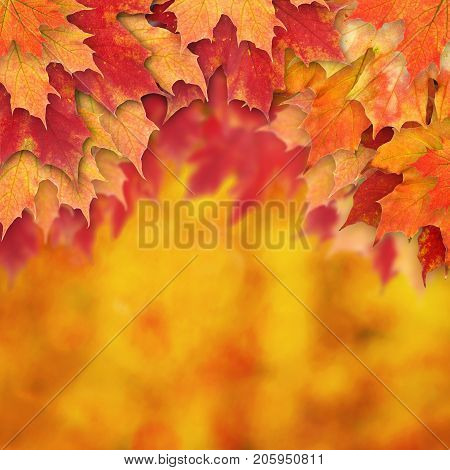 Abstract Autumn Background Border with Fall Leaves
