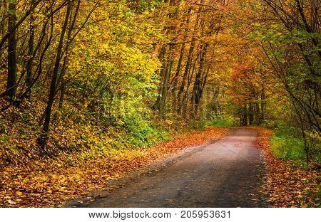 Light Spot On The Road Turnaround In Autumn Forest