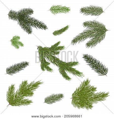 A set of Christmas tree branches for a Christmas decor. Branches close-up. Vector. Drawing. Nature details.