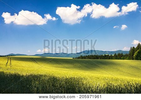 Country Landscape With Barley Field On A Sunny Day. Blue Sky Wit