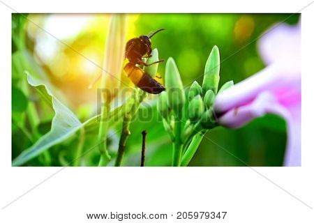 Bee pollinating in the morning. It is a way of finding food for insects in the ecosystem.