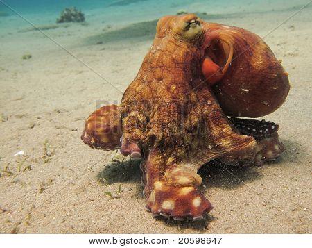 Verschieben von Octopus