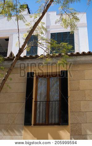 Window Reflecting Jacaranda Tree