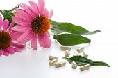 Closeup of Echinacea extract pills and fresh Echinacea flowers and leaves best suited for alternative medicine ads poster