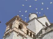San Francesco Cathedral view with doves in Assisi Italy poster