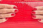 Close up red leather purse in female hands. Woman hands with red manicure holding red lacquered handbag close up. poster