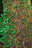plant glow over the tree rain forest wet moisture environment and nature ecosystem poster