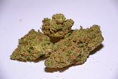 premium jack (cannabis cup award winner) is a sativa marijuana strain used for medical reasons poster