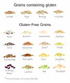 A variety of gluten free and containing gluten grains. Wheat, barley, oats, rye, buckwheat, amaranth, rice, millet, sorghum, quinoa, chia seeds, oatmeal, legumes. Vector isolated poster