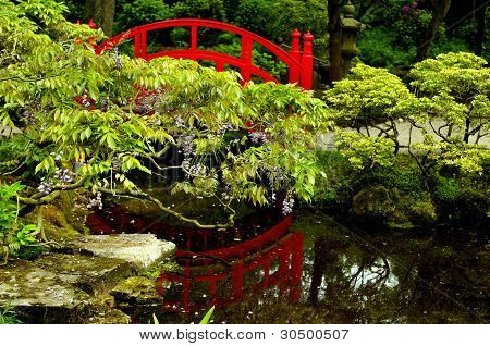 Water reflection in a Japanese garden
