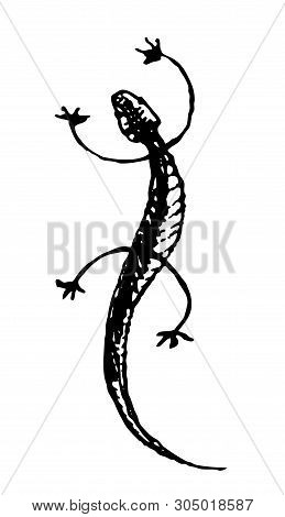 Gecko. Black And White Vector Handdrawn Sketch