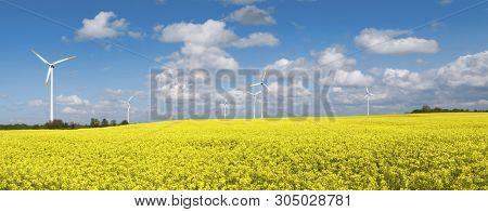 Blooming rape field and wind turbines