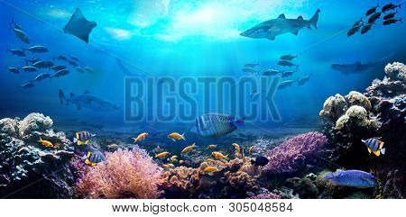 Underwater view of the coral reef. Life in the ocean. School of fish.