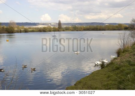 A view of a lake with some swans poster