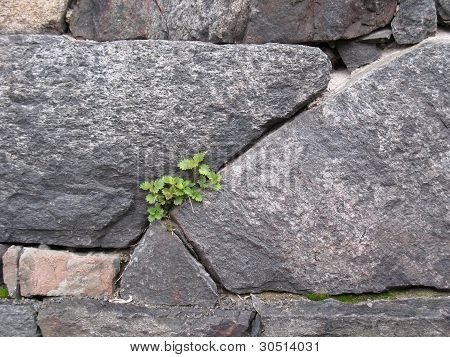 Texture of stone wall for background